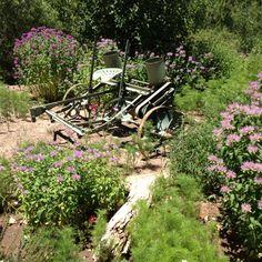 Antique Tractor......  Heritage Farm in ALBUQ Bio Park.