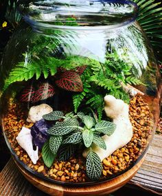 Terrariums are the perfect way to bring the beauty of nature into your home. These mini ecosystems recycle nutrients within the glass to create a self-sustaining environment. Terrariums by Bloom now available at our online shop for purchase. Local Atl area and surrounding towns. | ALLTHeBLOOM.COM