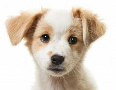 cute_puppies_14