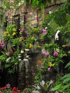 Wall of Orchids Flickr.com