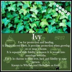 Ivy magic