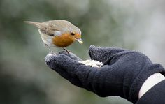 A bird in the hand… (by TheCoffeeNut)