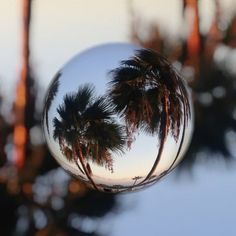 Quirkilicious palm trees with #marblecam
