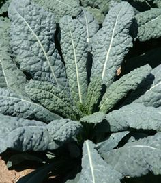 Refresh Your Vegetable Garden for a Fall Crop Wisconsin Master Gardeners Program  Kale is a very hardy vegetable that will survive late into the growing season.