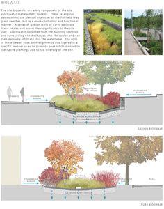 University of Connecticut | Bioswale diagrams | Stephen Stimson Associates
