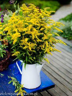 Kitchen Witch, Healing Herbs, Slim Body, Natural Medicine, Food Design, Herb Garden, Aloe Vera, Body Care, Flower Power