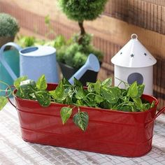 Beautiful metal planters for hassle-free planting session with your kids and pets. Herb Planters, Metal Planters, Planter Pots, Flowering Plants, Planting Flowers, Planter Accessories, Save Mother Earth, Metal Watering Can, Buy Metal