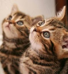 Focused Felines | Cutest Paw