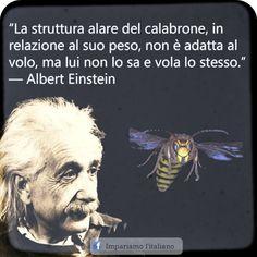 La struttura alare del calabrone in relazione al suo peso, non è adatta al volo, ma lui non lo sa e vola lo stesso.  Albert Einstein