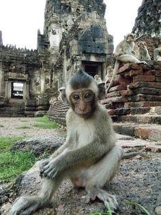 Monkey Temple – Lopburi, Thailand, San Phra Kan