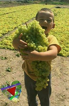 Bunch of Grapes and happiness of a cuties. Precious Children, Beautiful Children, Fruit And Veg, Fruits And Veggies, Funny Vegetables, Green Grapes Nutrition, Fruit Photography, Beautiful Fruits, Exotic Fruit