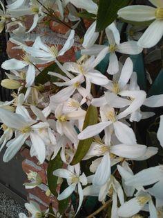 Esplosione di fiori: è arrivata la primavera nel mio giardino!