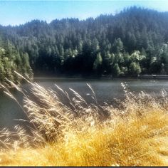 Alpine Lake. Mount Tamalpais. Just 10 miles from the hustle and bustle of 101 traffic, cell phones and road rage.