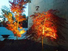 Autumn courtyard colour and garden lighting