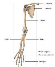 Extremidades superiores: braços