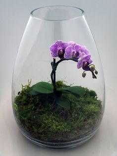 Miniature Orchid Terrarium In A Glass Cylinder