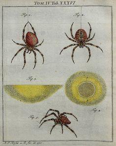 Spiders V.4 by peacay, via Flickr