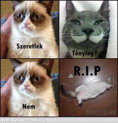grumpy cat magyar Cat Memes, Jokes, Lol, Humor, Grumpy Cats, Funny, Hungary, Animals, Vans