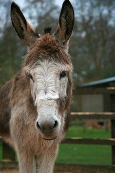 Moses - Donkey Sanctaury Birmingham