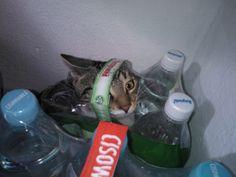 find the cat :)