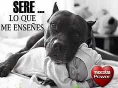 Mascotas Power : Sere ... lo que me ense#es .