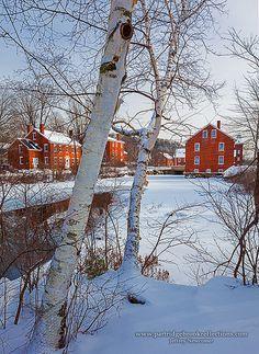 Mill Pond Birches
