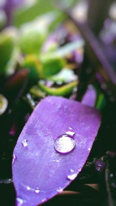 Settembre Rain  #flowers #mobilephotography