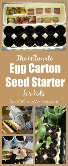 Indoor Gardening The Ultimate Egg Carton Seed Starter for Kids. This indoor seed starter is super easy for kids to make, and works as a visual reminder of what has been planted. Such a fun spring seed activity to do together! From Rain or Shine Mamma. Garden Crafts For Kids, Spring Crafts For Kids, Diy Garden, Garden Projects, Garden Kids, Kid Crafts, Creative Crafts, Gardens For Kids, Garden Club