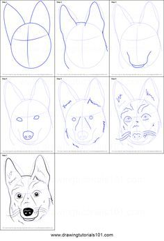 How to Draw German Shepherd Dog Face printable step by step drawing sheet : DrawingTutorials101.com