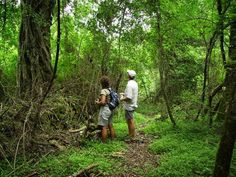 Woodbush Forest Reserve in Magoebaskloof, Limpopo. The Woodbush forest reserve lies in the heart of the valley called the Magoebaskloof, a mountainous . Game Reserve, Hiking Trails, Night Time, Waterfall, River, Park, Couple Photos, Road Trips, Road Trip