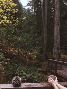 Home is where the heart is and the heart is in the woods.