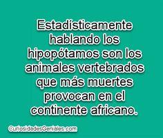 Hipopótamos mortales