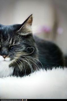 My name is Whisker. Wonder if that little heart-shaped whisker will keep it's shape. Love this baby!