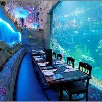 Downtown Denver Aquarium Restaurant Boulder Colorado Trip Springs
