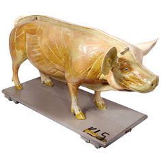 Life Size Anatomical Model of Pig - Gremany | From a unique collection of antique and modern models and miniatures at http://www.1stdibs.com/furniture/more-furniture-collectibles/models-miniatures/