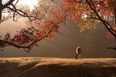 Draw On Photos, Nara, Fall Season, Beautiful Gardens, Photo Art, Deer, Wildlife, Laundry Hacks, Autumn