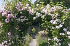 Colourful cascade: Pink climbing roses add charm and elegance to a cottage garden