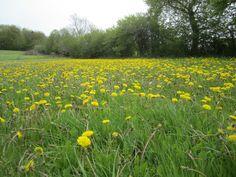 En gul mark