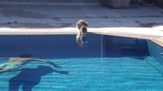 The Cat at pool made the day Epic Funny!