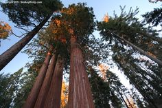Grant's Grove, Sequoia National Forest, CA (worked and lived in this area for 10+ years!)