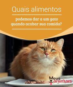 Quais alimentos podemos dar a um gato quando acabar sua comida? Se acabou a #comida do seu #gato e já for tarde para ir ao #mercado, você pode improvisar com o que tiver em casa. Neste artigo, contamos a você como. #Alimentação