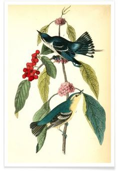 Coerulean Wood-Warbler (by List Collection) - John James Audubon - Premium poster