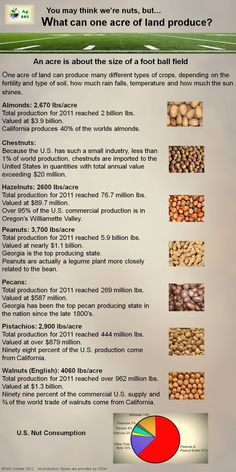 Nut Production Explained in this infographic from Ag101