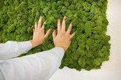 Reindeer Moss Acoustic Wall Panels by Freund