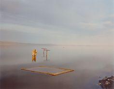 Dead Fish, Salton Sea   The Art Institute of Chicago
