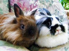 somebunnyhasablog:  Neva and Frannie, true loves! Happy Valentine's Day, everybunny!  awww