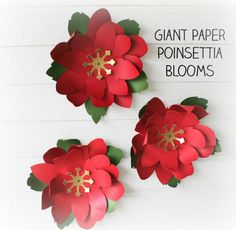 Giant Paper Poinsettia Flowers. Fill your house with these Christmas poinsettia. SVG Christmas Cutting Files.