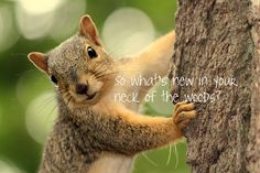 Nature greeting cards~ What's New with you?
