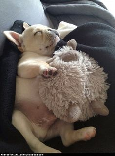 Adorable Sleeping French Bulldog Puppy with his Cuddly Toy Lamb Little Puppies, Cute Puppies, Cute Dogs, Dogs And Puppies, Doggies, Toy Dogs, Animals And Pets, Baby Animals, Funny Animals