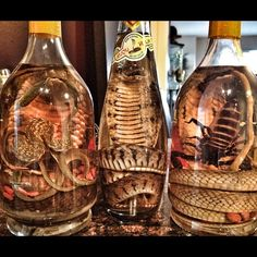 Real snake wine from Vietnam. | Use Instagram online! Websta is the Best Instagram Web Viewer!/ my Hubby says this was 'nasty'.